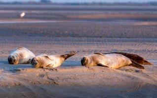 Annulé - Rencontre avec les phoques