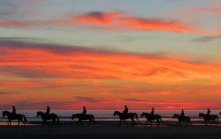 Balade du soir à cheval en Baie d'Authie