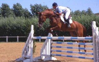 Saut d'Obstacles - concours club et poneys