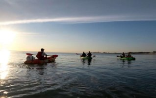 Balade Pirogue/ Kayak à la rencontre des phoques