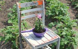 « Rendez-vous aux jardins »