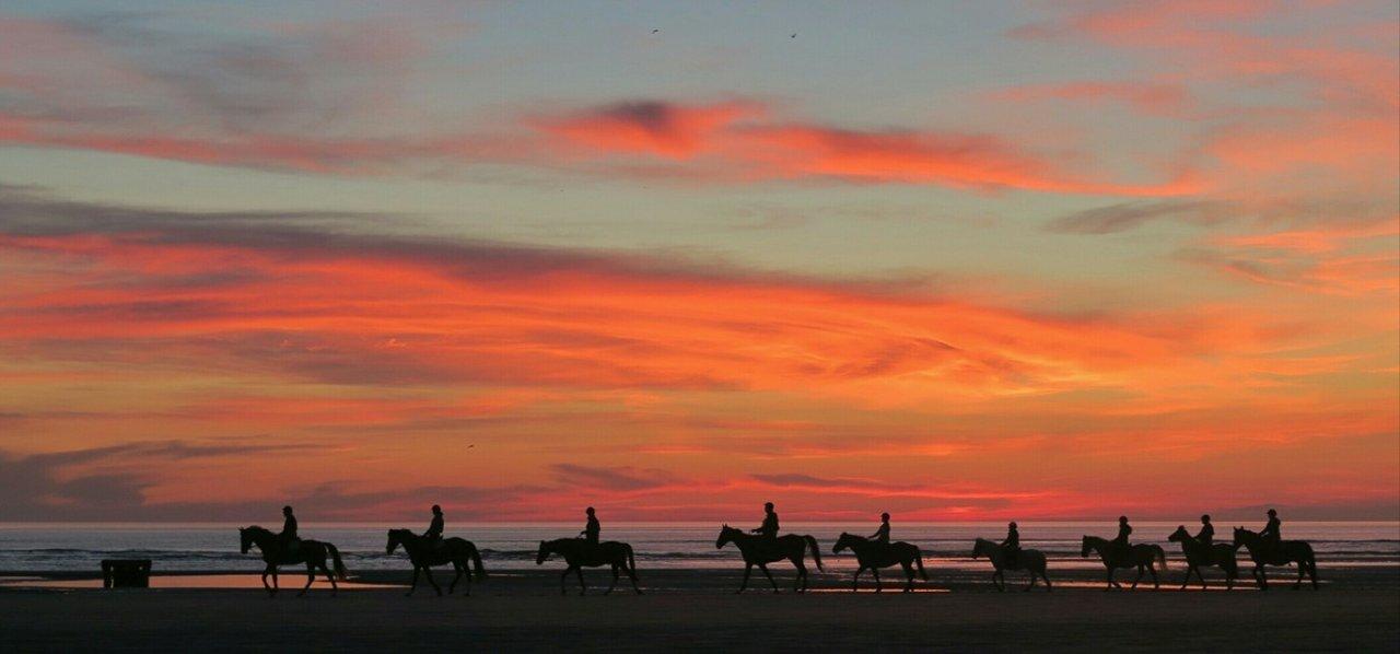 cheval coucher soleil